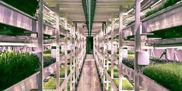 granja-subterranea-londres