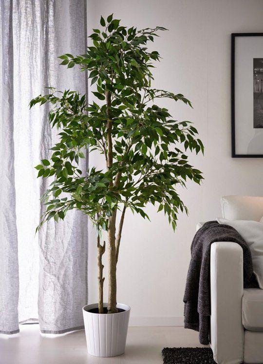 Consejos para iluminar correctamente tus plantas