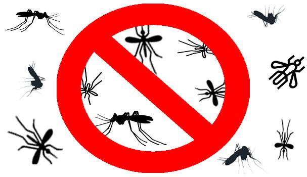 Eliminar mosquitos de casa